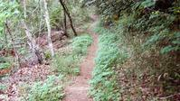 ユウホ…梨畑コースをウオーキングしました - ヒデさんの山遊び