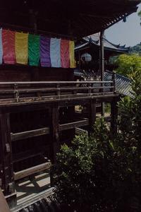 長谷寺~牡丹以外の花々 - 鏡花水月
