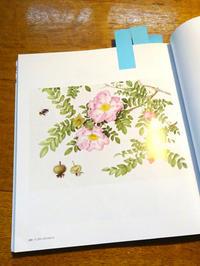 芝田美智子さんのボタニカルアート - 駒場バラ会咲く咲く日誌