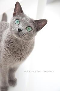 shizuku[しずく] - sky blue drop~14ニャンズトネコハウス//