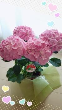 母の日(^^) - タイ式マッサージ サイチャイ