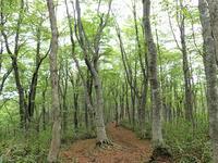 新緑の大万木山⑤ - 清治の花便り