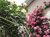 キュアートさんのガーデンパーティー☆ - ちくちく薔薇たいむ(*^^*)