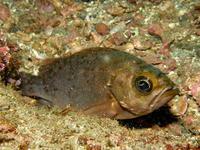 2011.08 伊豆山 The 1st Dive - ランゲルハンス島の海