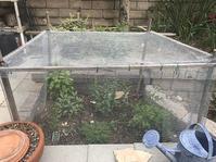 Our herb garden - Where I belong