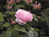 垂直仕立て栽培を始める - 自然農☆☆☆菜園日記