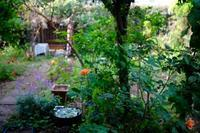 間引き菜でピクルス - 世話要らずの庭