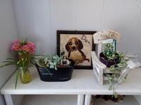 お花で癒す空間に - ドッグケアハウス 伝