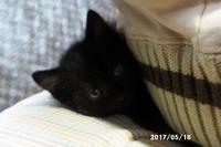クロの卓球観戦 - 猫と自然と散歩の日々