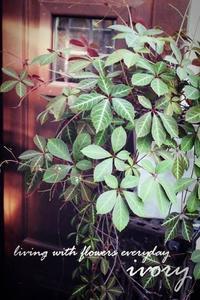 『フレンチトースト〜黒蜜きなこ〜』 -  Flower and cafe 花空間 ivory (アイボリー)