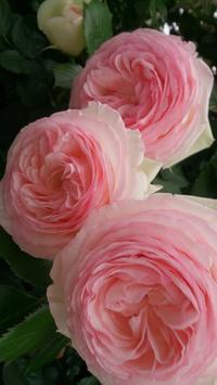 可憐な花 - parfumlabo