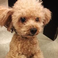 Hello yasu!! - Doggie Do!! / good dog and hello cat !!