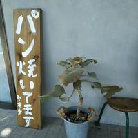 Yakichi(ヤキチ)のパンあれこれ@福岡・大橋 - a day in my life