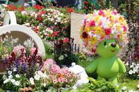 横浜はお花満開です♪ - 湘南気まま生活♪