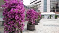 5月旅先での花と風景 その1 in 九州 - 初めてのブルーベリー栽培記