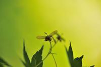 小満第22候蚕起きて桑を食む - Wind Tribe Story