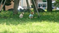 木陰で、ご主人様を待つ二匹の犬 - NPO法人セラピア函館代表ブログ セラピア自然農園栽培日記