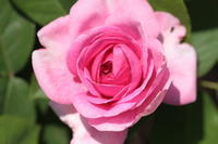 熊山英国庭園 - 花と小鳥の図鑑風