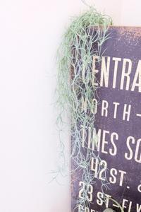 ニトリの優秀なフェイクグリーンが在庫復活! そして新たなフェイクも♡ - WITH LATTICE