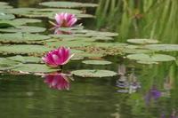 「出会い-平安神宮から哲学の道へ-」 - ほぼ京都人の密やかな眺め Excite Blog版