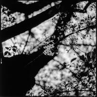 卯月の桜 - NINE'S EDITION