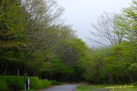 緑の森を歩く - 長い木の橋