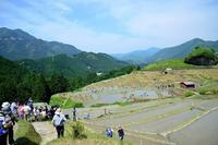 観光という夢11世界遺産がやってきた - LUZの熊野古道案内