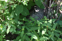小冒険 - 小さな森のキキとサラ