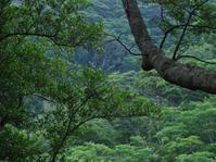 デイゴの花にて - cuccooの野鳥エトセトラ