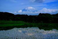 29年5月の富士(13)水田と富士 - 富士への散歩道 ~撮影記~