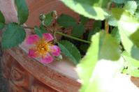 花粉め!☆ - ROSE HOUSEの日常