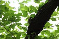 いつもの公園の野鳥とカキツバタ - 今日のいちまい