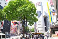 5月23日(火)今日の渋谷109前交差点 - でじたる渋谷NEWS