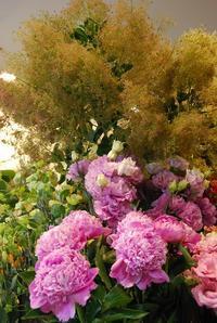 スモークツリーの季節です。 - 花と暮らす店 木花 Mocca
