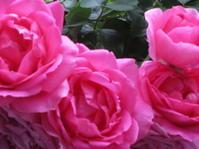 美しいバラと祈りの日☆Laurent Jeanninシェフからの贈り物♡。..゚。*・。☆♬*† - 代官山だより♪