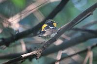 カルガモの交尾 - 野鳥写真日記 自分用アーカイブズ