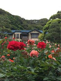 素敵な洋館と薔薇の庭園〜鎌倉文学館 - -