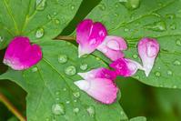 庭の花 - デジカメ写真集