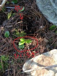シクシク(T . T)  芽が、双葉が、、、 - ののち幾星霜