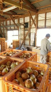 5月の仕事場 - 山脇農園ブログ