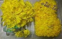 重陽の節句にちなみ菊花の扱い - シアワセ色のテーブル