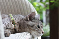 ためいき - 小さな森のキキとサラ