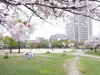 雨の日の公園 - Day by  day