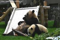 2017年5月白浜パンダ見隊その6 - ハープの徒然草