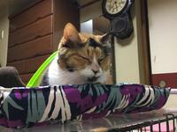 猫ベッドをもらう - ねこ結び2