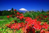 29年5月の富士(19)御殿場の富士 - 富士への散歩道 ~撮影記~
