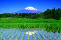 29年5月の富士(20)茶畑と富士 - 富士への散歩道 ~撮影記~