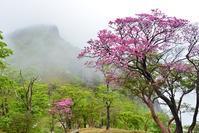 霧にうかぶ花の山釈迦ヶ岳 - 峰さんの山あるき