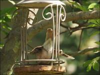 若鳥たち - L'Ambiance du Midi