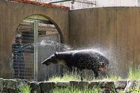 シャワーって気持ちがいい! - 動物園放浪記